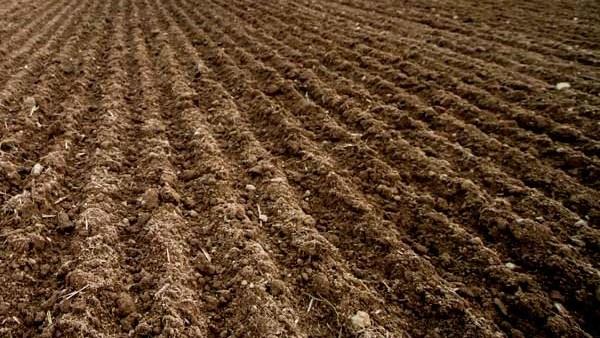 Indea multa 25 fazendas por não cumprir vazio sanitário da soja