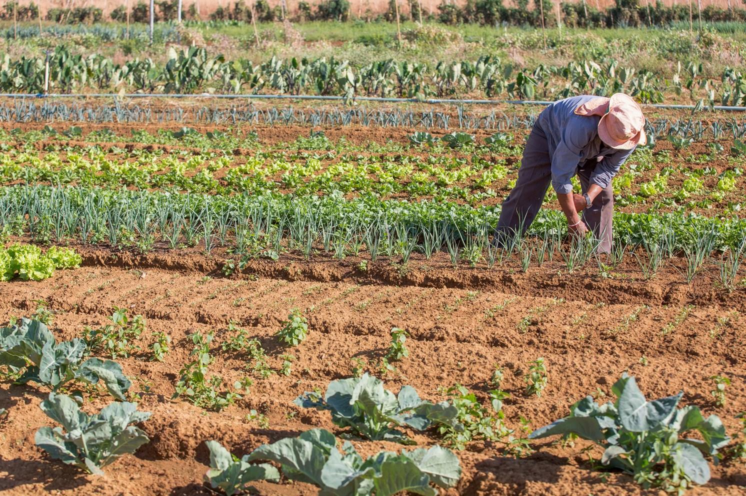 Justiça suspende licenciamento ambiental para limpeza de áreas rurais