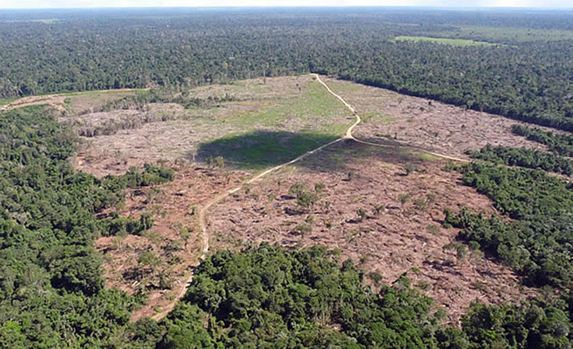 Justiça manda bloquear R$ 26,8 mi de fazendeiro por crime ambiental em MT