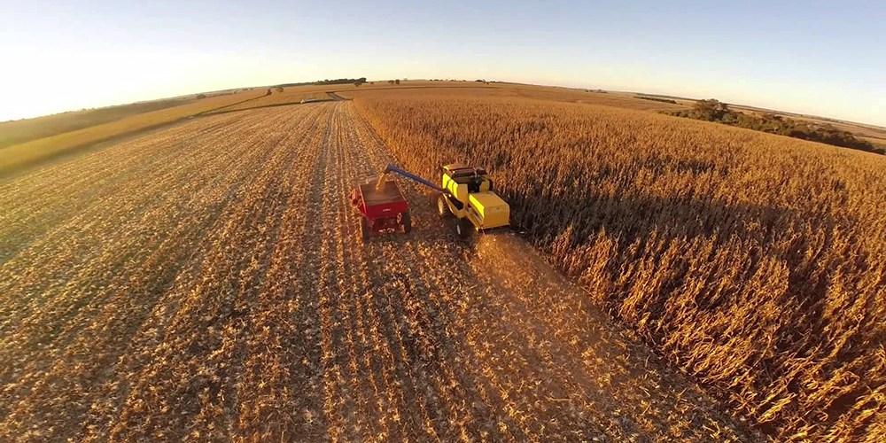 Estimativa da produção de grãos despenca 14,6% em Mato Grosso