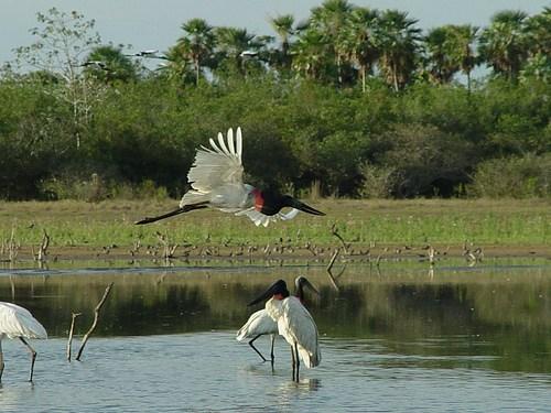 Emendas da CMA garantem recursos para preservação do Pantanal