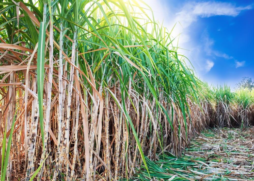 Setor sucroenergético de MT busca fortalecimento no cenário nacional
