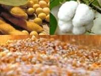 Produção brasileira de grãos deverá crescer 21,5% em 10 anos, estima ministério