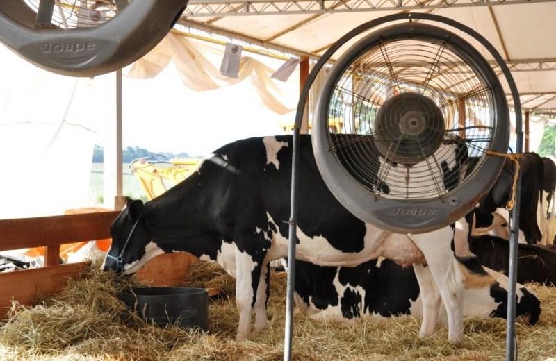 Câmara Setorial deve debater ações para fomento à cadeia produtiva do leite