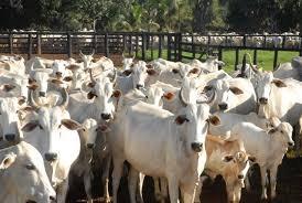 MT recebe selo internacional de qualidade da carne produzida no Estado