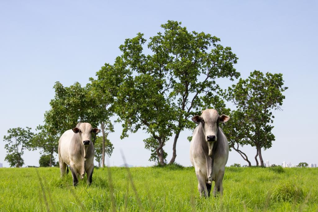 Indea confirma caso de raiva bovina no interior e monitora região